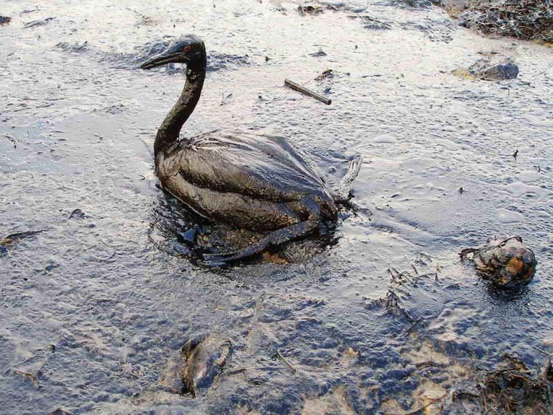 Последствие экологической катастрофы